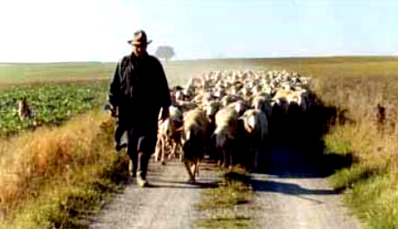 If Danger Is Ahead The Shepherd Meets Peril Before Sheep Do As We Go Through Difficult Trials Must Remember That Our Not Driving